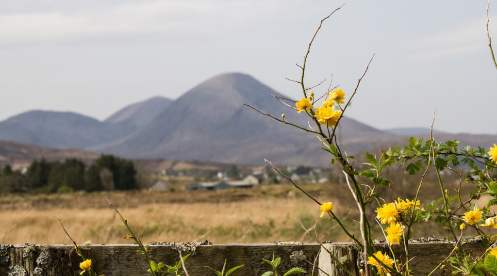 yellow flowers with mountain in the background